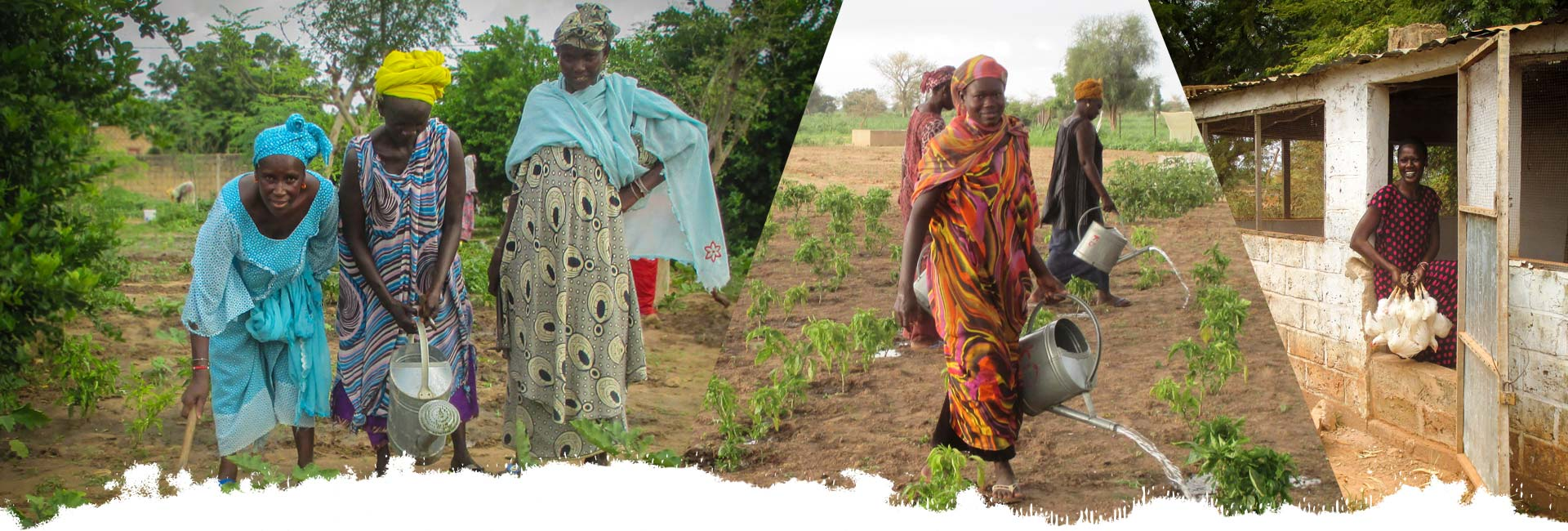 sustainable projects in senegal